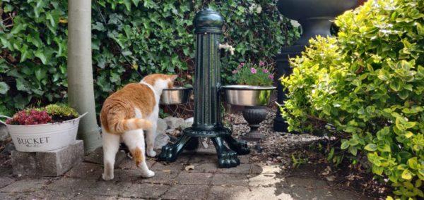"""Waterzuil:waterkolom """"Pet"""" met kraan en drinkbakken kat"""